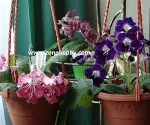как удобрять комнатные цветы