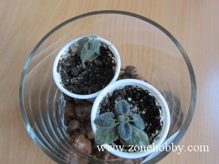 Уход и выращивание микросиннингий