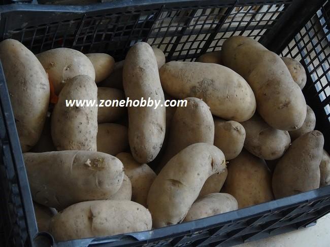 выращивание картошки в ящиках