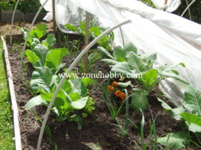 Что сажать на огороде
